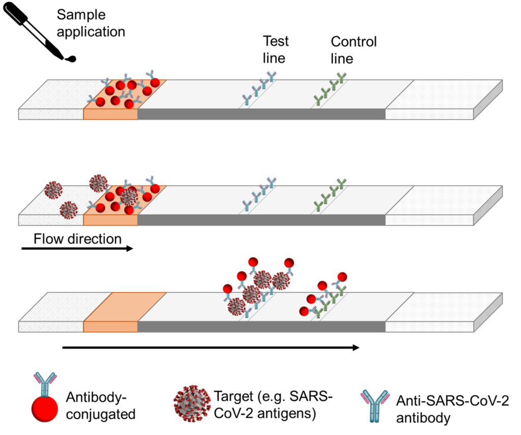 Antibody-antigen reactions within a lateral flow assay