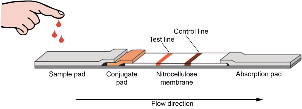 Schematic of a typical lateral flow assay device